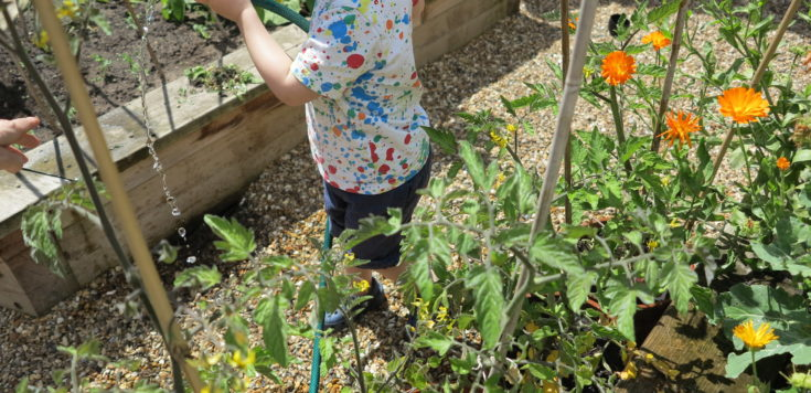 Toddler watering plants in an allotment garden using a gardening hose.