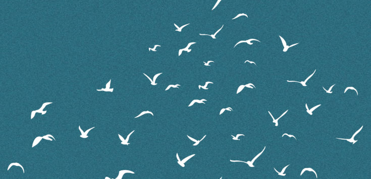 Silhouettes of birds flying in white on a dark blue background.