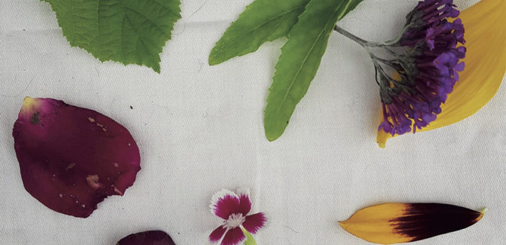 A selection of different colour flowers and leaves laid out on a white cotton napkin.